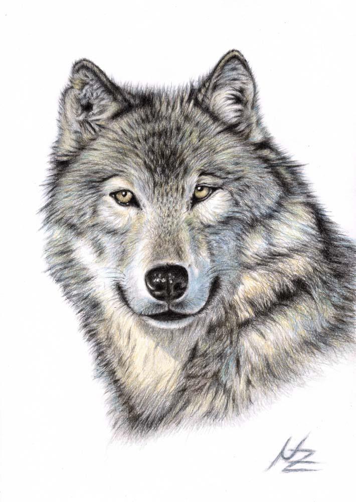 FOTO Zeichnung Wolfsgesicht (von Anna bereitgestellt)